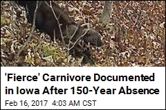 'Fierce' Carnivore Documented in Iowa After 150-Year Absence