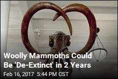 'Maverick Geneticist' Close to Resurrecting Woolly Mammoth