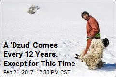 A 'Dzud' Comes Every 12 Years. Except for This Time