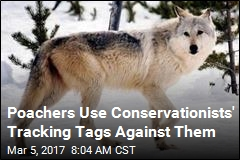 Poachers Hack Tracking Tags to Hunt Endangered Animals