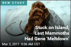 Stuck on Island, Last Mammoths Had Gene 'Meltdown'
