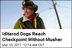 Iditarod Dogs Reach Checkpoint Without Musher