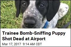 Trainee Bomb-Sniffing Puppy Shot Dead at Airport