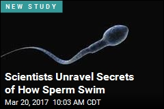 Scientists Unravel Secrets of How Sperm Swim