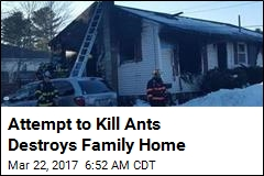 Guy Trying to Kill Ants Burns Down Parents' Home