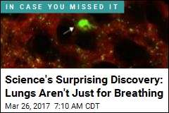 Science's Surprising Discovery: Lungs Aren't Just for Breathing