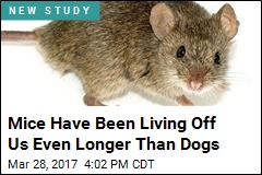 Mice Have Been Living Off Us Even Longer Than Dogs