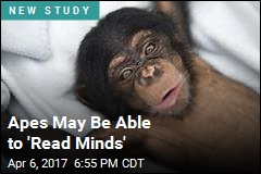 Want to Know If You're Wrong? Ask an Ape