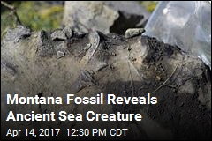 Montana Fossil Belonged to Prehistoric Sea Creature