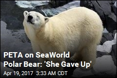 SeaWorld Polar Bear Dies Suddenly