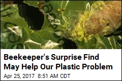 Caterpillar's Surprise Ability May Help Our Plastic Problem