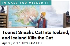 Tourist Sneaks Cat Into Iceland, and Iceland Kills the Cat