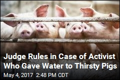 Activist Avoids Jail Time for Giving Water to Thirsty Pigs