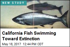 California Fish Swimming Toward Extinction