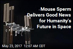 Sperm From Space Yields Healthy Mice