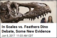 In Scales vs. Feathers Dino Debate, Some New Evidence