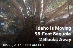 Idaho Is Moving 98-Foot Sequoia 2 Blocks Away