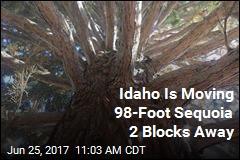 Idaho Is Moving 98-Foot Sequoia 2 Blocks Away