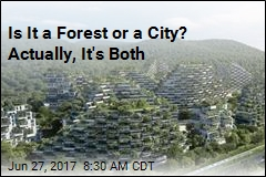 Is It a Forest or a City? Actually, It's Both