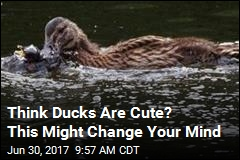 In a First, Ducks Spotted Eating Other Birds