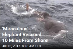 'Miraculous': Elephant Rescued 10 Miles From Shore