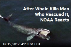 After Whale Kills Man Who Rescued It, NOAA Reacts
