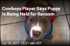 Cowboys Player Says Dognappers Took His Puppy