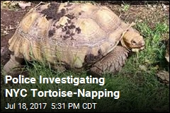 Police Investigating NYC Tortoise-Napping