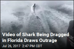 Florida Investigates 'Disgusting' Shark-Dragging Video