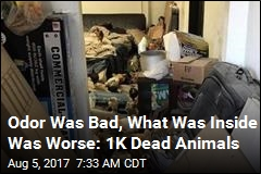 Odor Was Bad, What Was Inside Was Worse: 1K Dead Animals