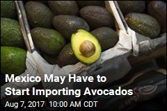 Mexico May Have to Start Importing Avocados