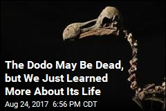 The Dodo May Be Dead, But We Just Learned More About Its Life