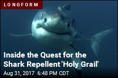 Inside the Quest for the Shark Repellent 'Holy Grail'