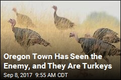 Oregon Town to State: Save Us From the Turkeys