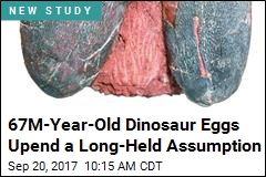 67M-Year-Old Dinosaur Eggs Upend a Long-Held Assumption