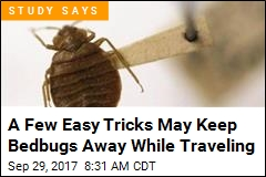 A Few Easy Tricks May Keep Bedbugs Away While Traveling