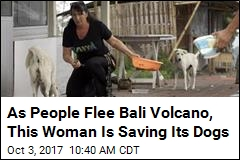 US Woman's Mission: Save Bali's Volcano Dogs