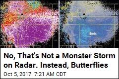 No, That's Not a Monster Storm on Radar. Instead, Butterflies