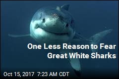 One Less Reason to Fear Great White Sharks