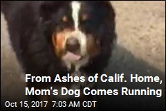 From Ashes of Calif. Home, Mom's Dog Comes Running