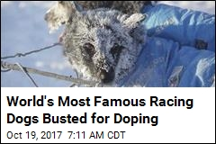 World's Most Famous Racing Dogs Busted for Doping