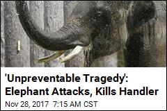Movie Star Elephant Attacks, Kills Handler in Thailand
