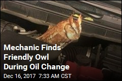 Oil Change Turns Into Owl Sighting