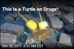 This Is a Turtle on Drugs*
