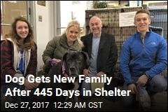 Mastiff Mix Gets a Home After 445 Days in Shelter