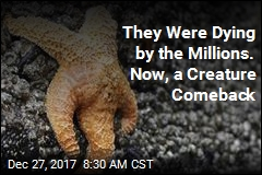 They Were Dying by the Millions. Now, a Creature Comeback