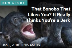 That Bonobo That Likes You? It Really Thinks You're a Jerk