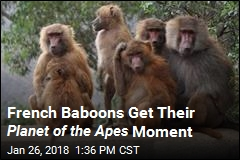 French Baboons Get Their Planet of the Apes Moment