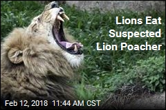 Suspected Lion Poacher Is Killed— by Lions