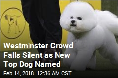 Bichon Frise Is America's New Top Dog